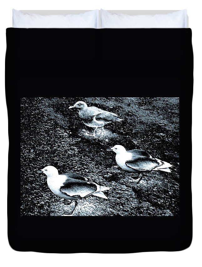 Seagulls Duvet Cover featuring the digital art Seagull Trio by Will Borden
