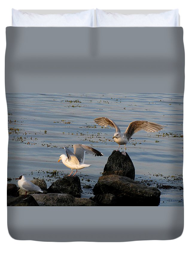 Birds Duvet Cover featuring the photograph Seaguls 3 by Cristina Rettegi