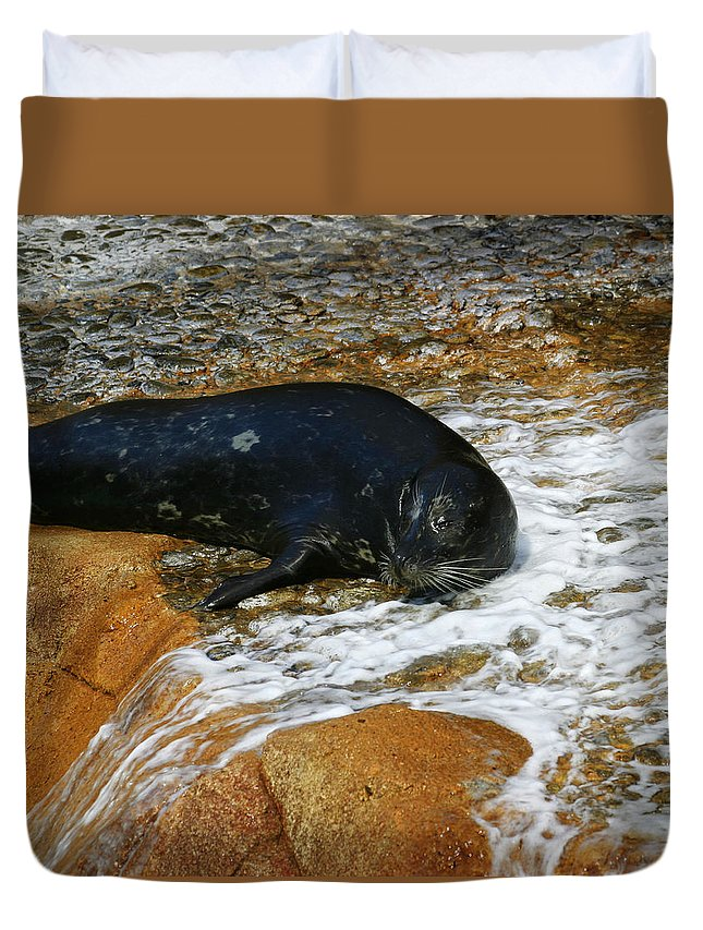 Seal Duvet Cover featuring the photograph Seal by Anthony Jones