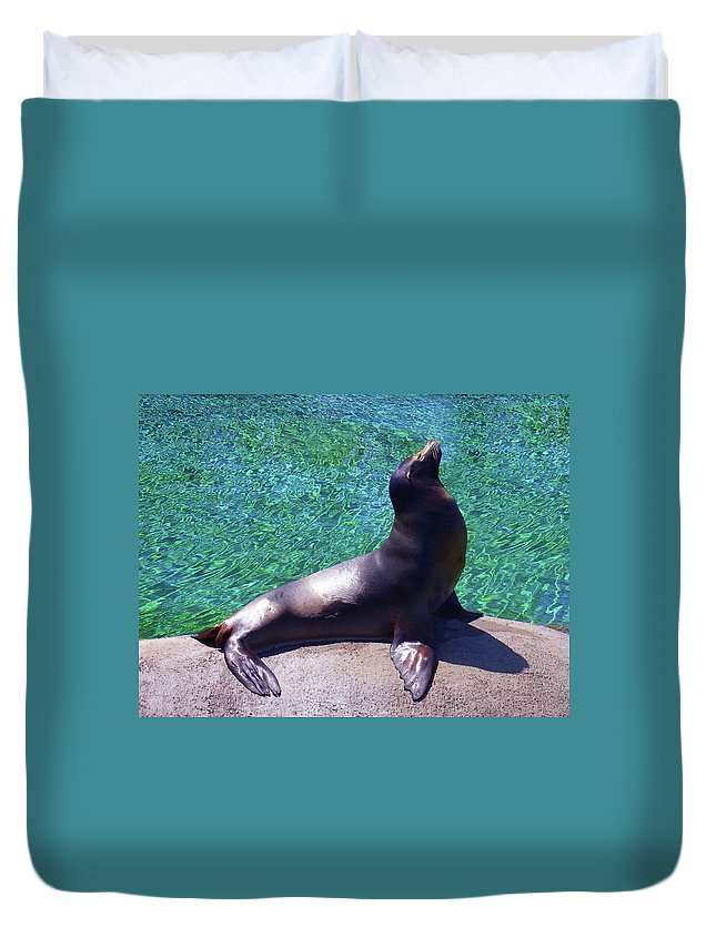 Duvet Cover featuring the photograph Seal At The Kansas City Zoo by Steve Karol