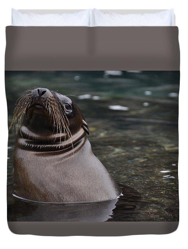 Galapagos Duvet Cover featuring the photograph Seal In The Water by Harry Coburn