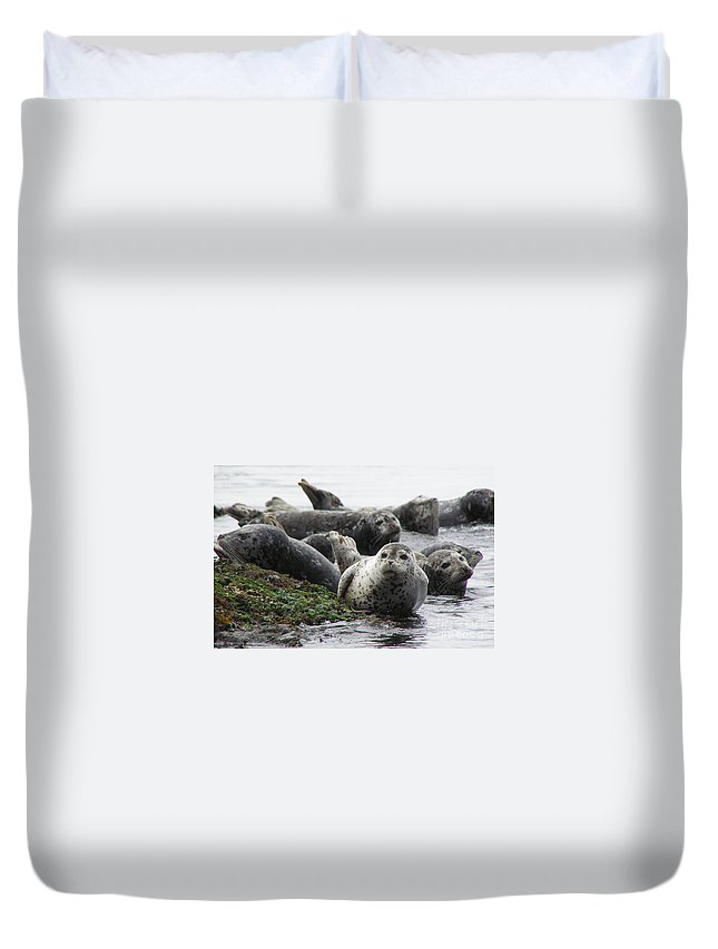 Seals Duvet Cover featuring the photograph Seal Rock by Louise Magno