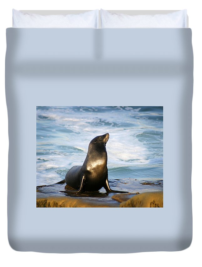 Sealion Duvet Cover featuring the photograph Sealion by Anthony Jones