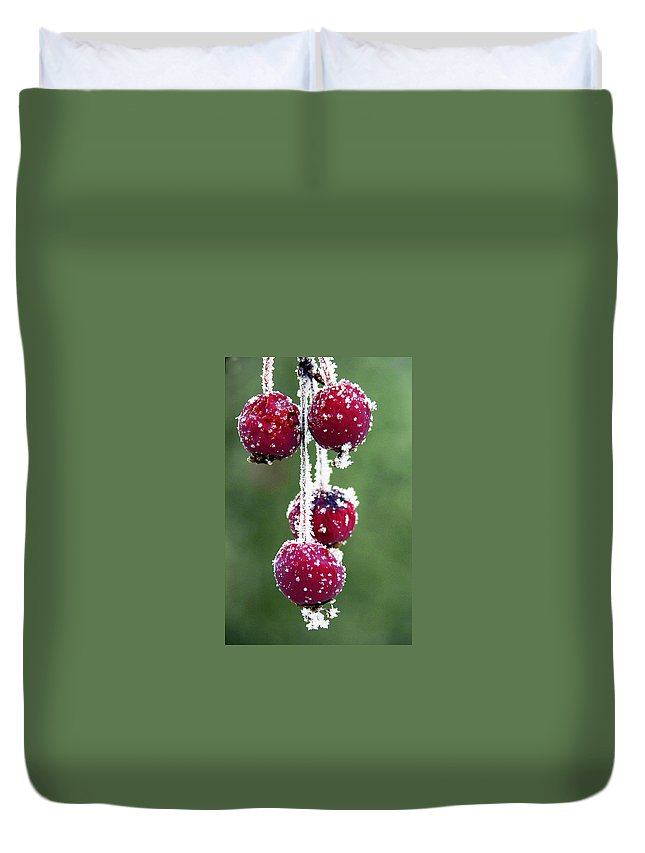 Berries Duvet Cover featuring the photograph Seasonal Colors by Marilyn Hunt
