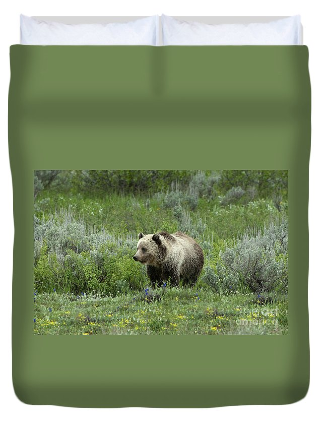 Grizzly Bear Duvet Cover featuring the photograph Searching For Berries by Sandra Bronstein