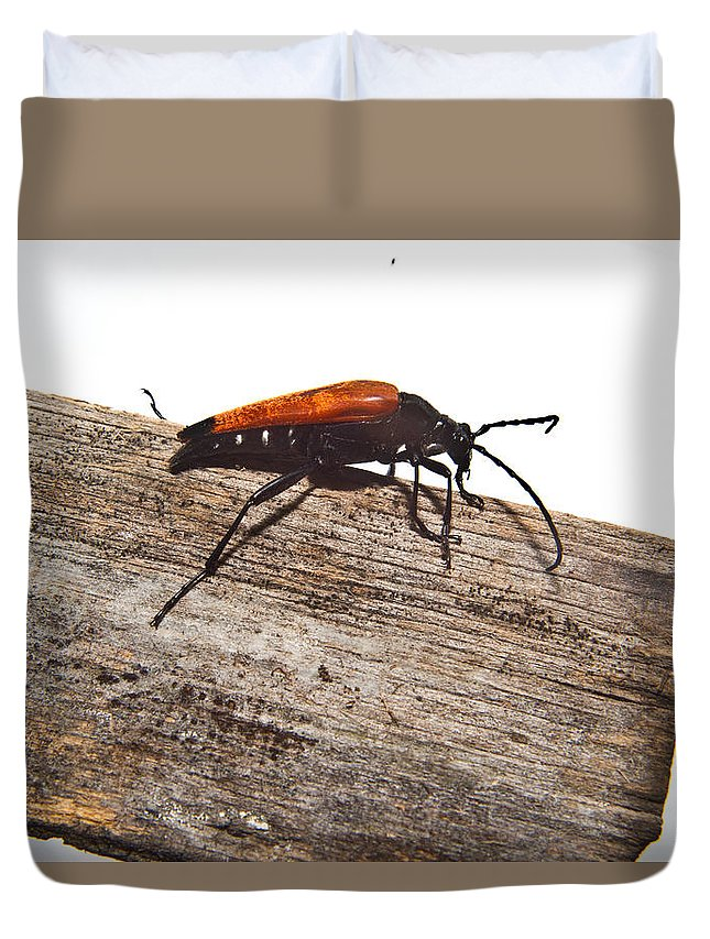 Cumberland Duvet Cover featuring the photograph Searching for Food by Douglas Barnett
