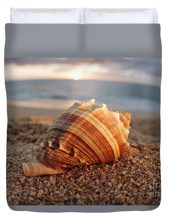Background Duvet Cover featuring the photograph Seashell In The Sand by Vince Cavataio - Printscapes