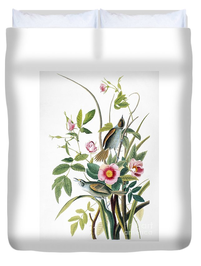 1858 Duvet Cover featuring the photograph Seaside Sparrow, 1858 by Granger