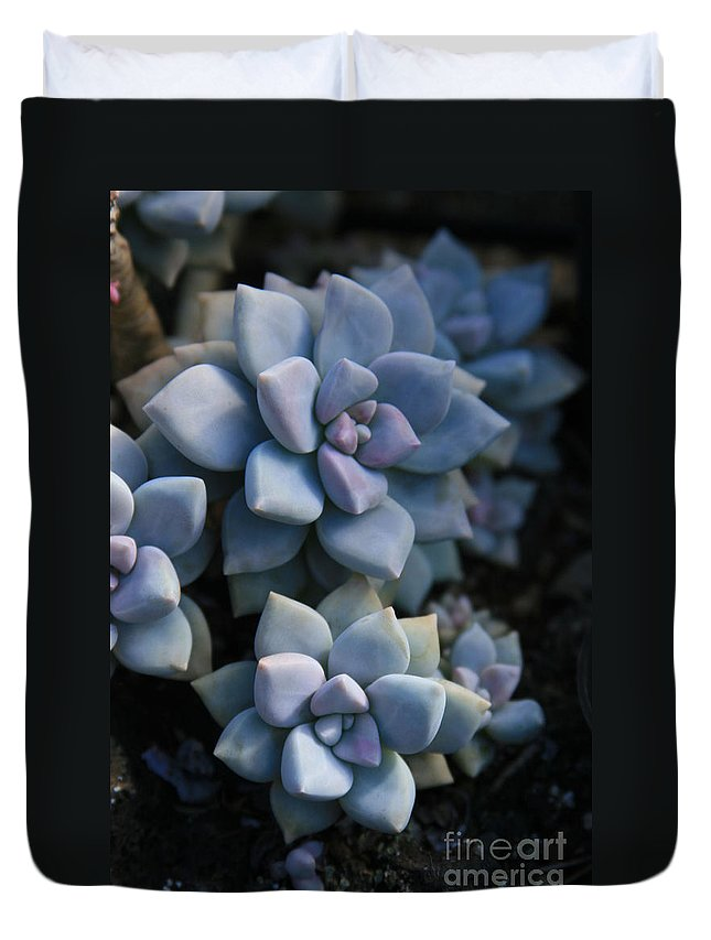 Aloha Duvet Cover featuring the photograph Sedum Clavatum Beautiful Cultivated Stonecrop by Sharon Mau