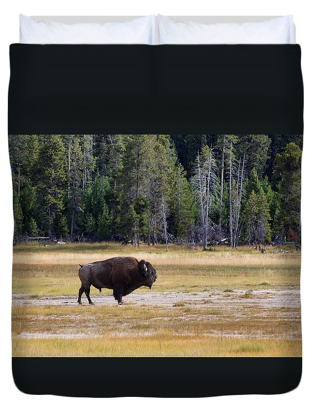 Bison Duvet Cover featuring the photograph Senior North Amercian Bull Buffalo by Thomas Baker