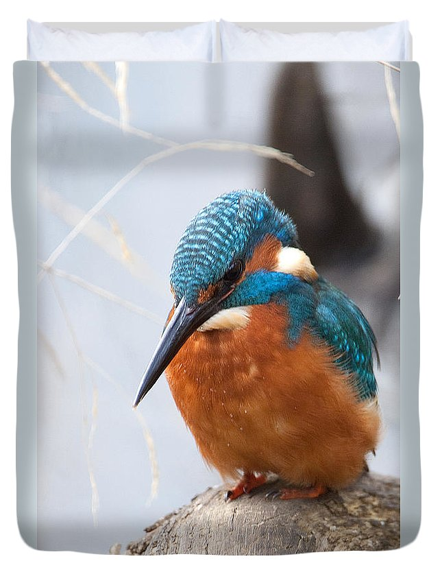 Kingfisher Duvet Cover featuring the photograph Serious Kingfisher by Bob Kemp