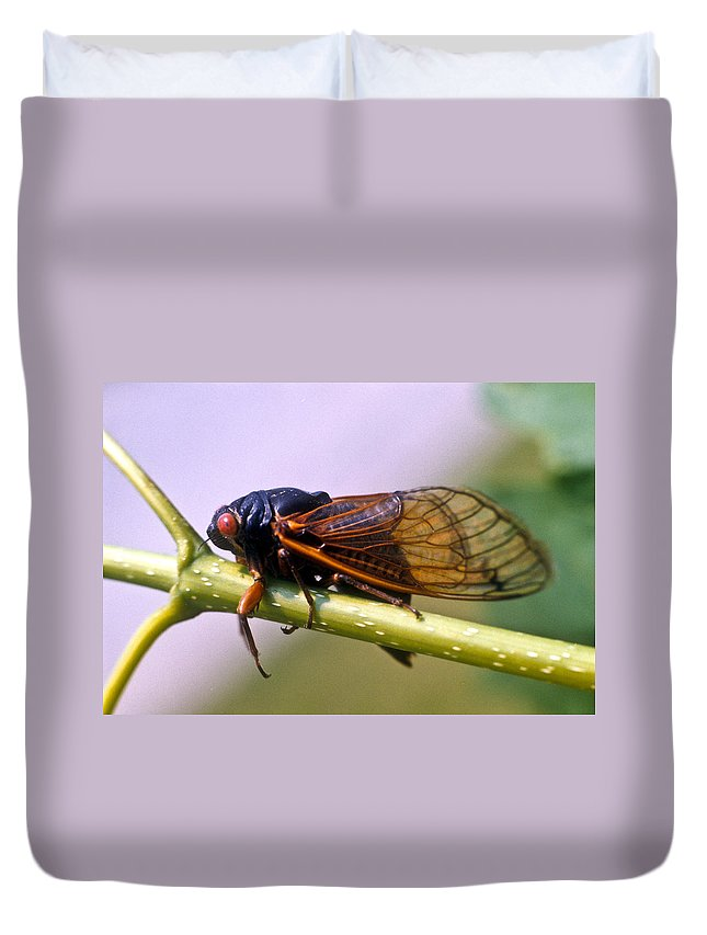 Insecta Duvet Cover featuring the photograph Seventeen Year Cicada by Douglas Barnett
