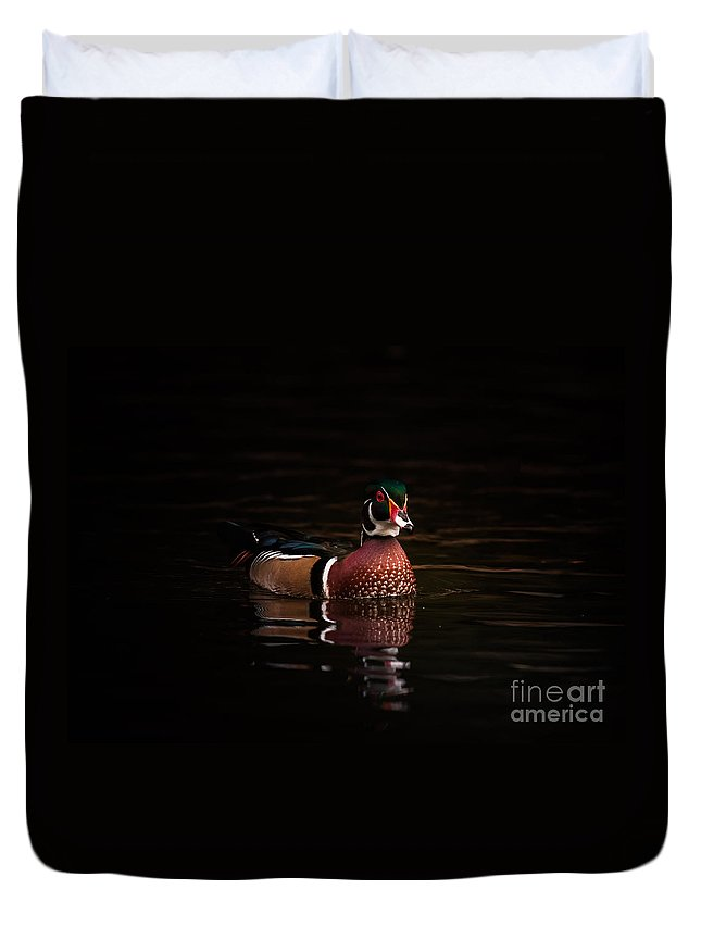 Animal Duvet Cover featuring the photograph Shaded Wood Duck by Robert Frederick