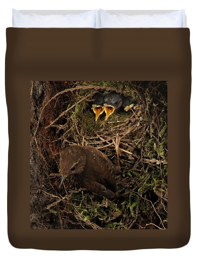 Portrait Duvet Cover featuring the photograph Shades Of Brown by Damon Calderwood