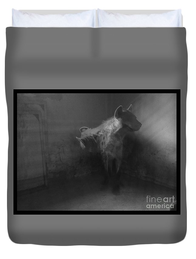 Hyena Zoo Black And White Cornered Beast Light Photo Manipulation Duvet Cover featuring the photograph Shamed Beast by Mina Milad