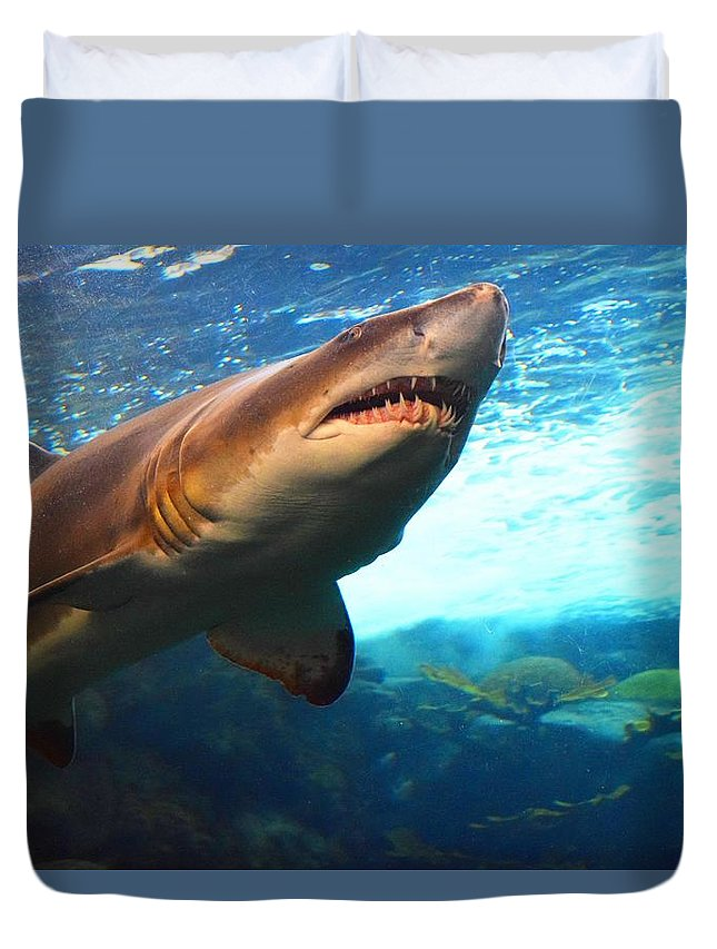 Animals Duvet Cover featuring the photograph Shark by Marnie Malone
