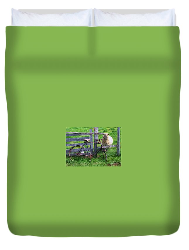 Photograph Sheep Bicycle Fence Grass Duvet Cover featuring the photograph Sheep And Bicycle by Seon-Jeong Kim
