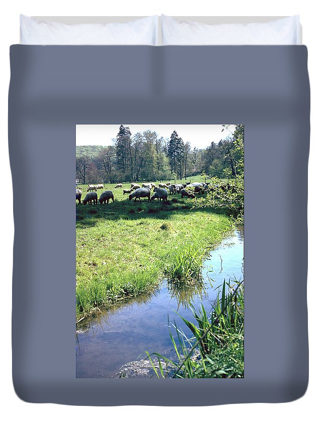 Sheep Duvet Cover featuring the photograph Sheep by Flavia Westerwelle