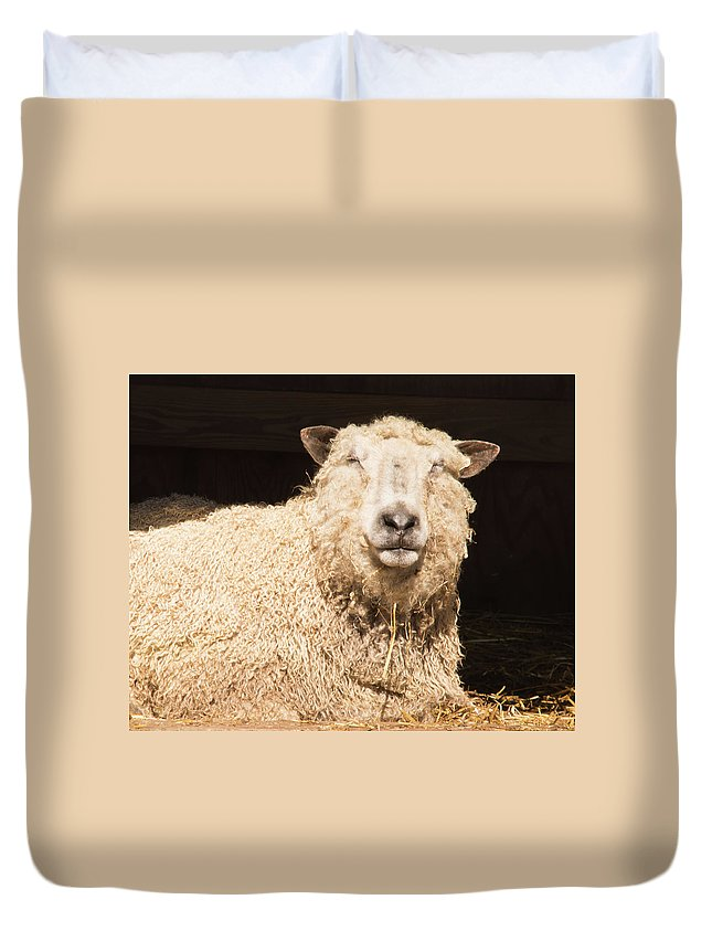 Sheep Duvet Cover featuring the photograph Sheep In Stable 2 by Diane Schuler