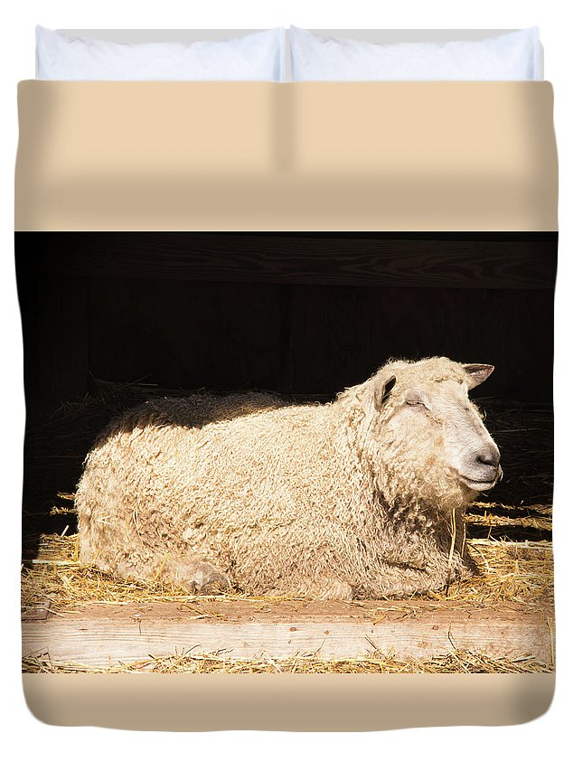 Sheep Duvet Cover featuring the photograph Sheep In Stable by Diane Schuler
