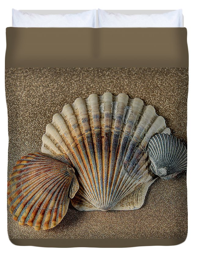 Shells Duvet Cover featuring the photograph Shells 1 by Luis Cifuentes