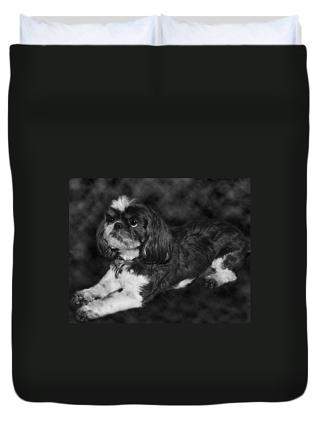 3scape Duvet Cover featuring the painting Shih Tzu by Adam Romanowicz