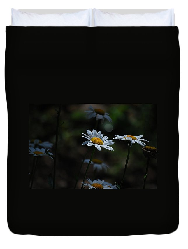 Daisy Duvet Cover featuring the photograph Shine On Me by Lori Tambakis