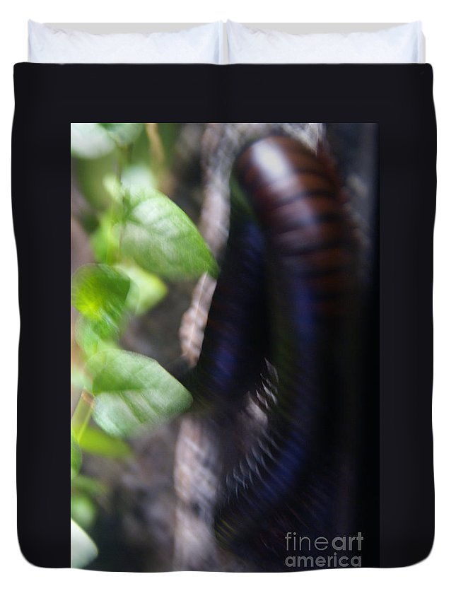 Millipede Duvet Cover featuring the photograph Shongololos by Linda Shafer