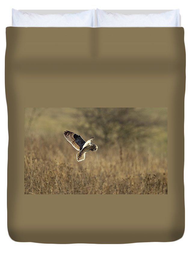 Birds Duvet Cover featuring the photograph Short-eared Owl About To Strike by Bob Kemp