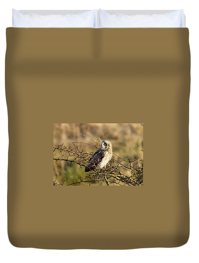 Birds Duvet Cover featuring the photograph Short-eared Owl In Tree by Bob Kemp