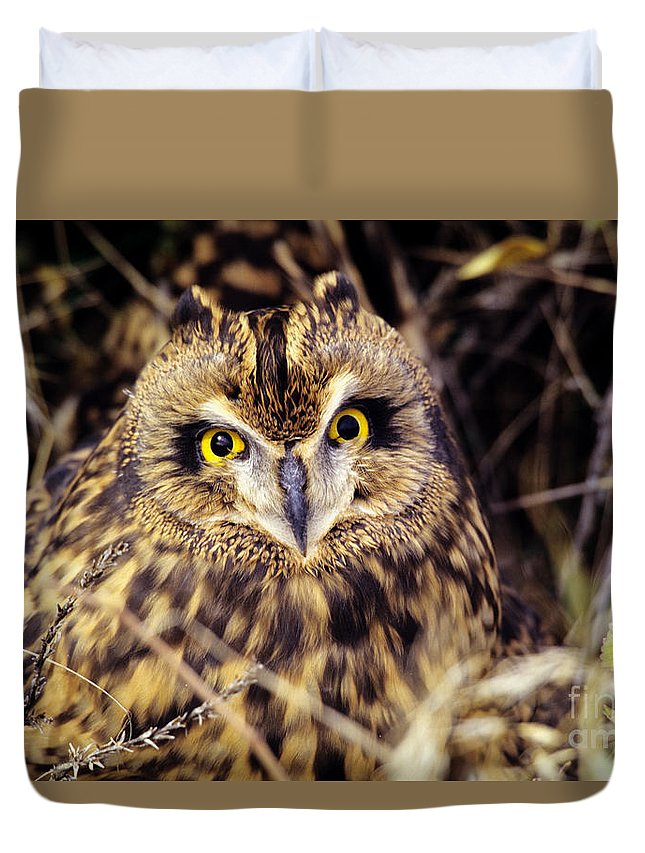 Animal Art Duvet Cover featuring the photograph Short Eared Owl by John Hyde - Printscapes