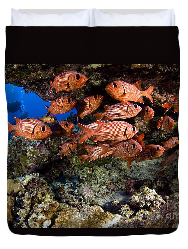 Animal Art Duvet Cover featuring the photograph Shoulderbar Soldierfish by Dave Fleetham - Printscapes