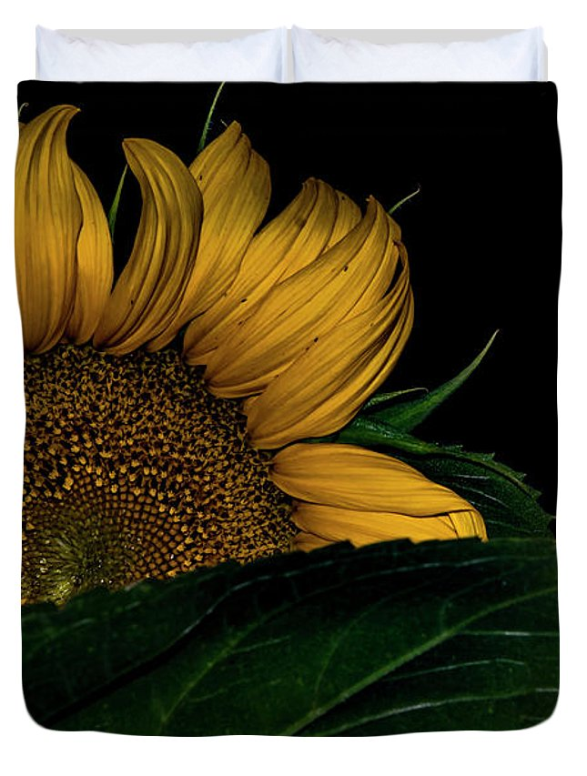 Sunflower Duvet Cover featuring the photograph Shy by Cindy Gatzemeier