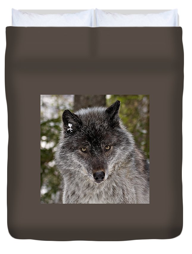 Wild Duvet Cover featuring the photograph Shy by Colette Panaioti