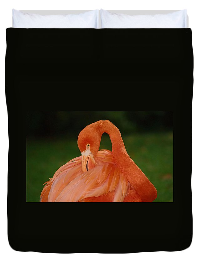 Flamingo Duvet Cover featuring the photograph shy by Gaby Swanson