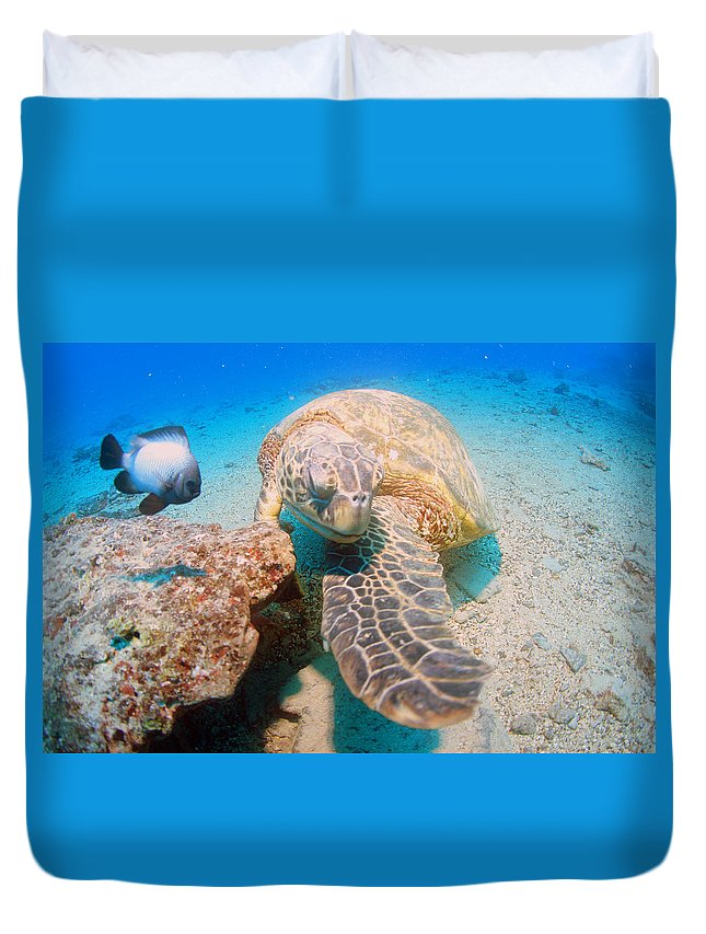 Duvet Cover featuring the photograph Shy Guy by Todd Hummel