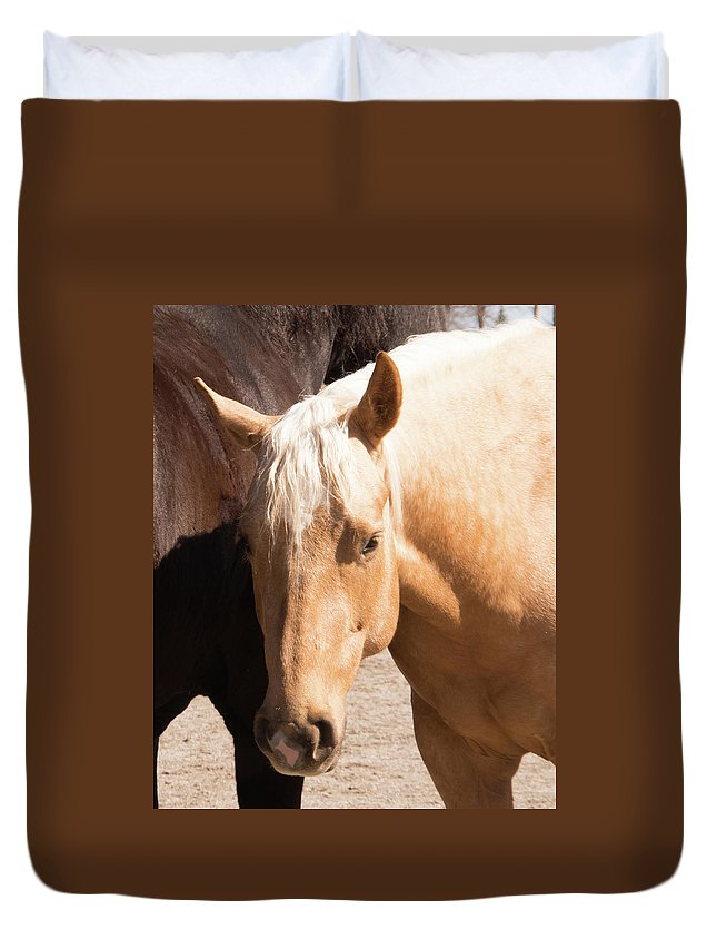 Horse Duvet Cover featuring the photograph Shy Horse by Diane Schuler