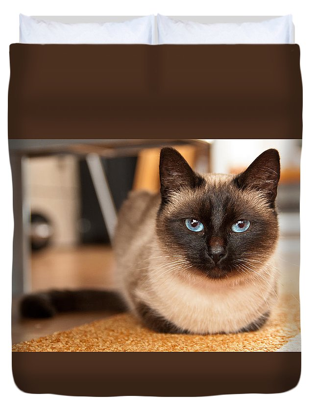 Siamese Duvet Cover featuring the photograph Siamese Cat by Catalin Pomeanu