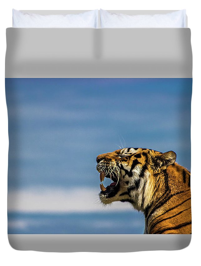 Tiger Duvet Cover featuring the photograph Siberian Tiger by Martin Newman
