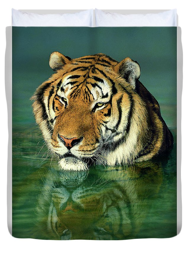 Siberian Tiger Duvet Cover featuring the photograph Siberian Tiger Reflection Wildlife Rescue by Dave Welling