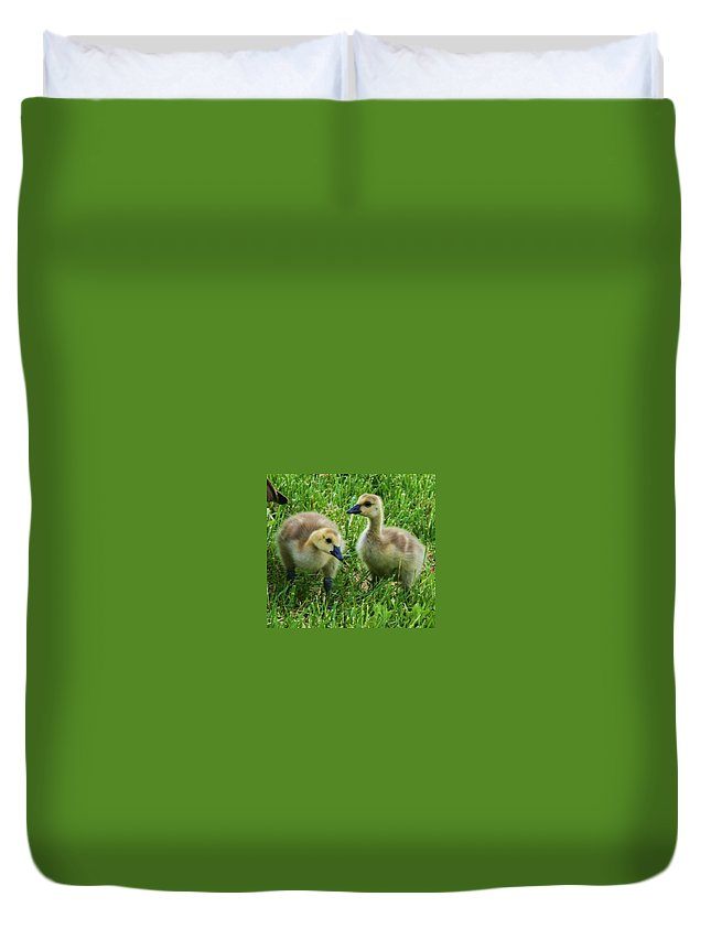 Nature Duvet Cover featuring the photograph Siblings by Angus Hooper Iii