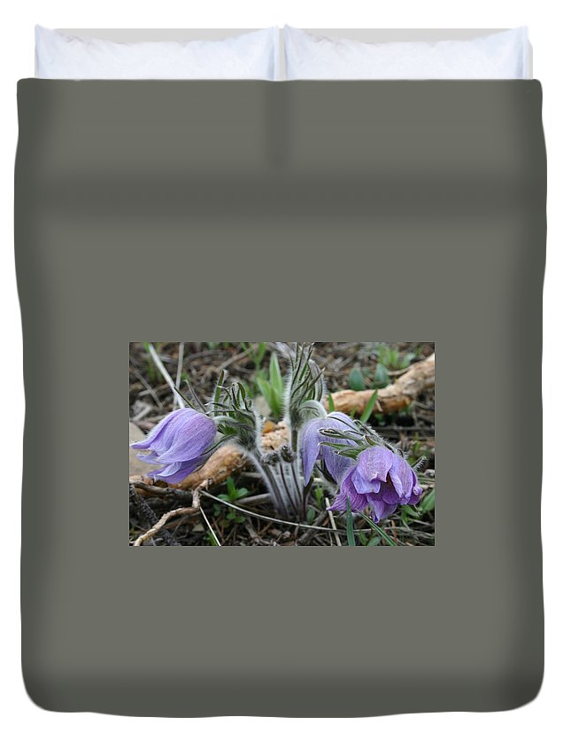 Pasque Flower Duvet Cover featuring the photograph Signs Of Spring by Nelson Strong