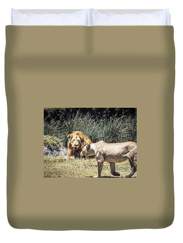 Male Lion Duvet Cover featuring the photograph Silent Longing by Robin Zygelman