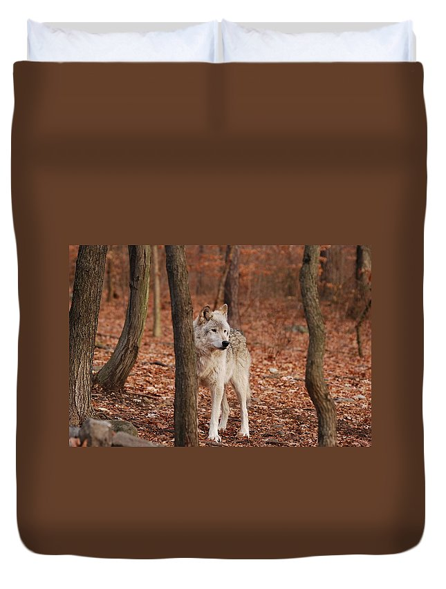 Wolf Duvet Cover featuring the photograph Silent One by Lori Tambakis
