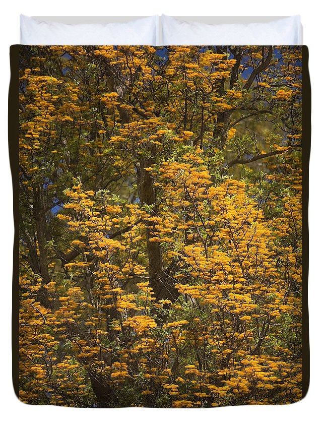 Bloom Duvet Cover featuring the photograph Silver Oak by Ron Dahlquist - Printscapes