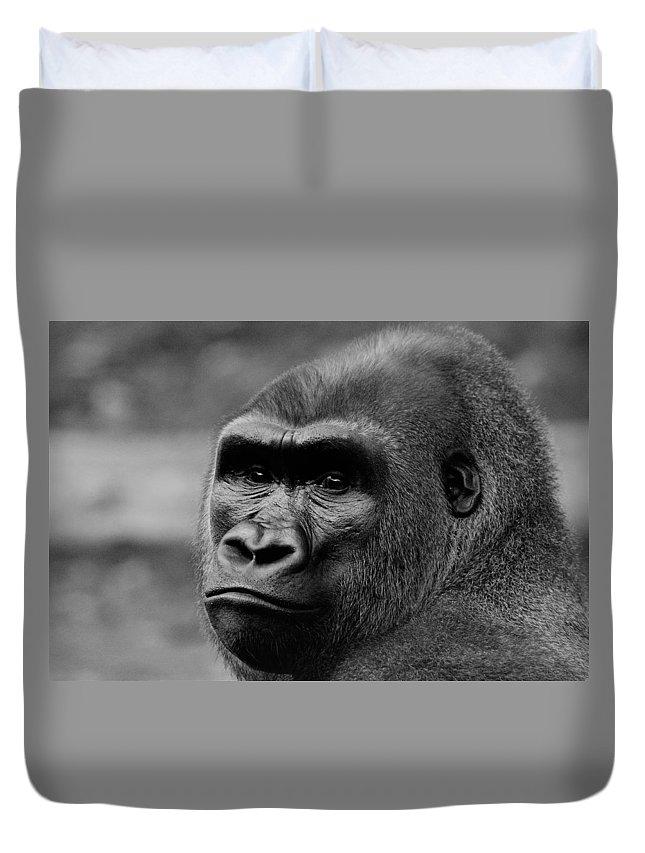 Gorilla Duvet Cover featuring the photograph Silverback Gaze by John Ruggeri