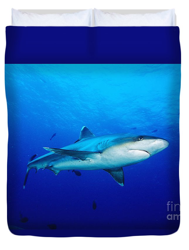 Above Duvet Cover featuring the photograph Silvertip Shark In Thailand by Dave Fleetham - Printscapes