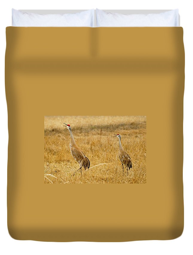 Sandhill Crane Duvet Cover featuring the photograph Sing Out Loud by Greg Norrell