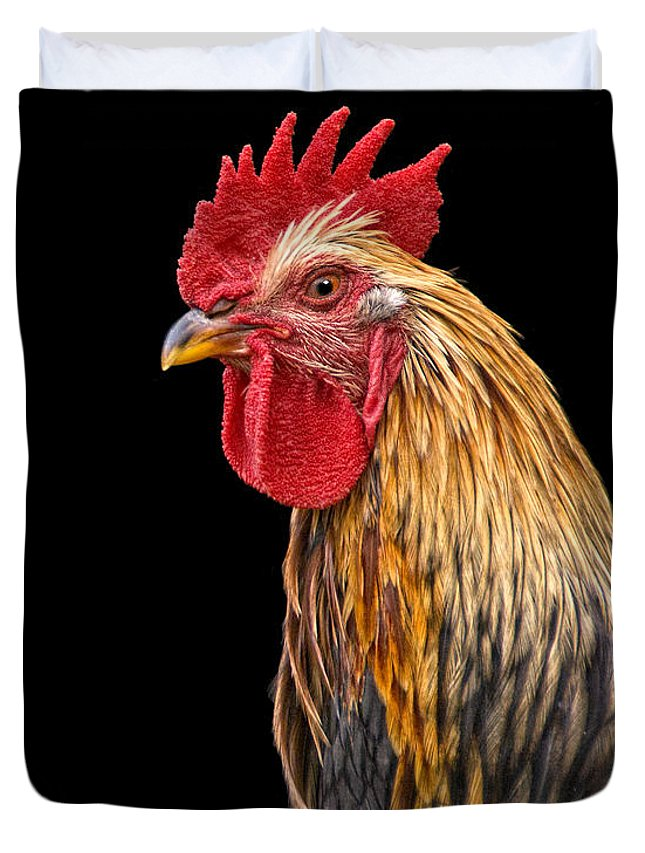 Rooster Duvet Cover featuring the photograph Single Rooster by Timothy Flanigan and Debbie Flanigan Nature Exposure