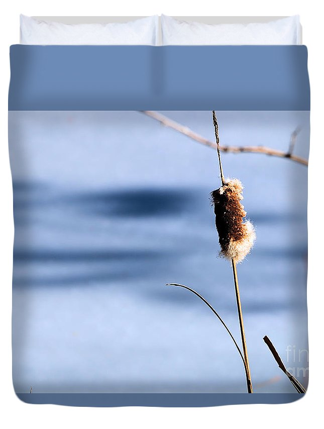 Broadleaf Cattail Duvet Cover featuring the photograph Single Stem by Elizabeth Dow